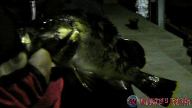 生月島釣行、夜の部~メバリングゥ~