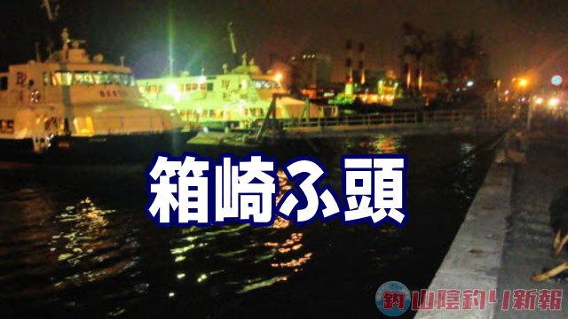 箱崎埠頭メバル調査