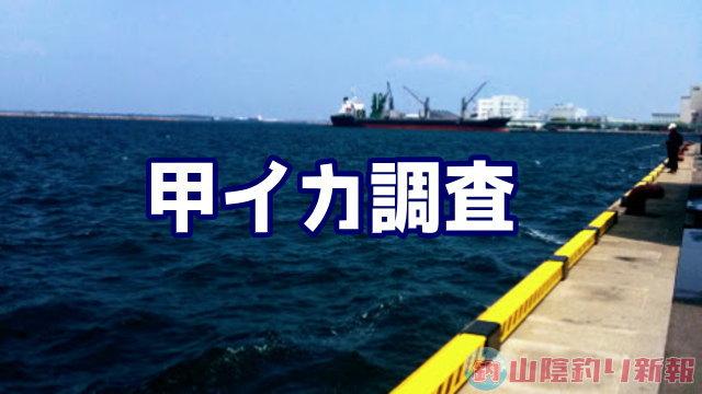 箱崎埠頭へ甲イカ調査(ΦωΦ)