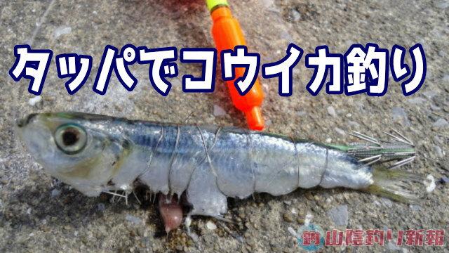 ママカリ vs 甲イカ