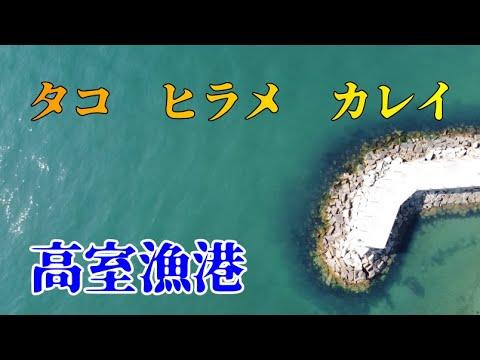 【倉敷】タコやヒラメが釣れる高室漁港
