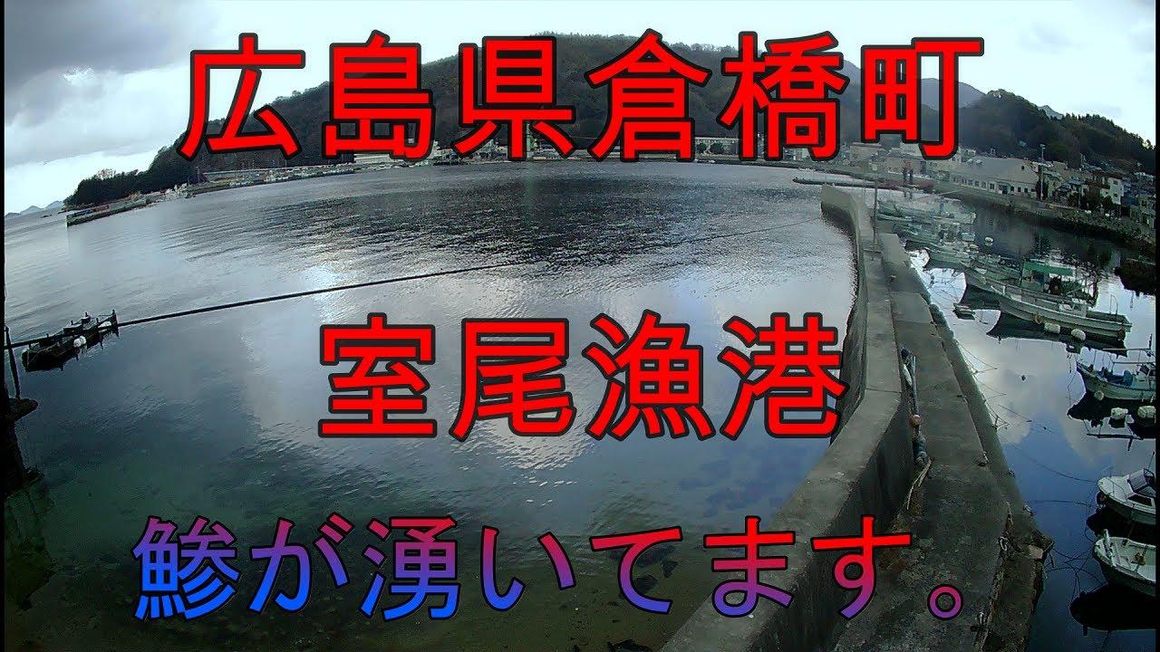 【海中動画】広島県呉市倉橋町室尾漁港!の巻