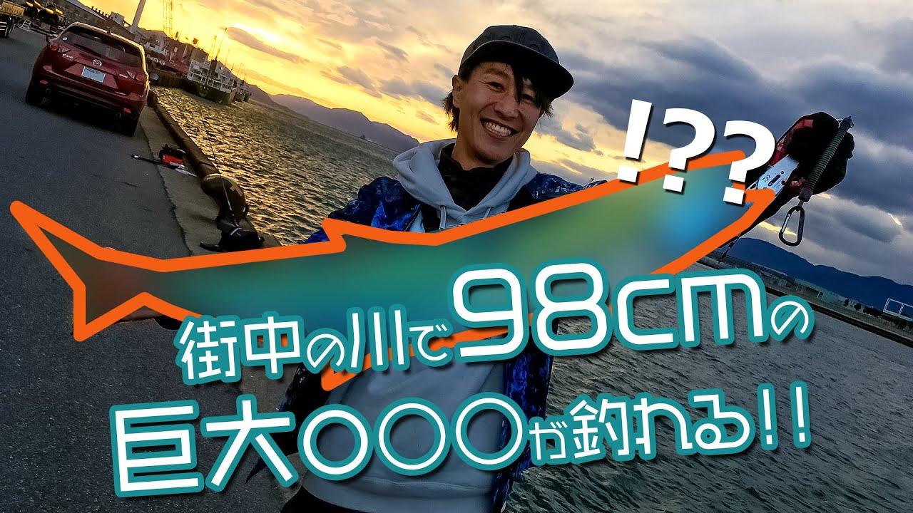 【神回】広島市内の川で!?98cmの巨大魚が釣れる!!