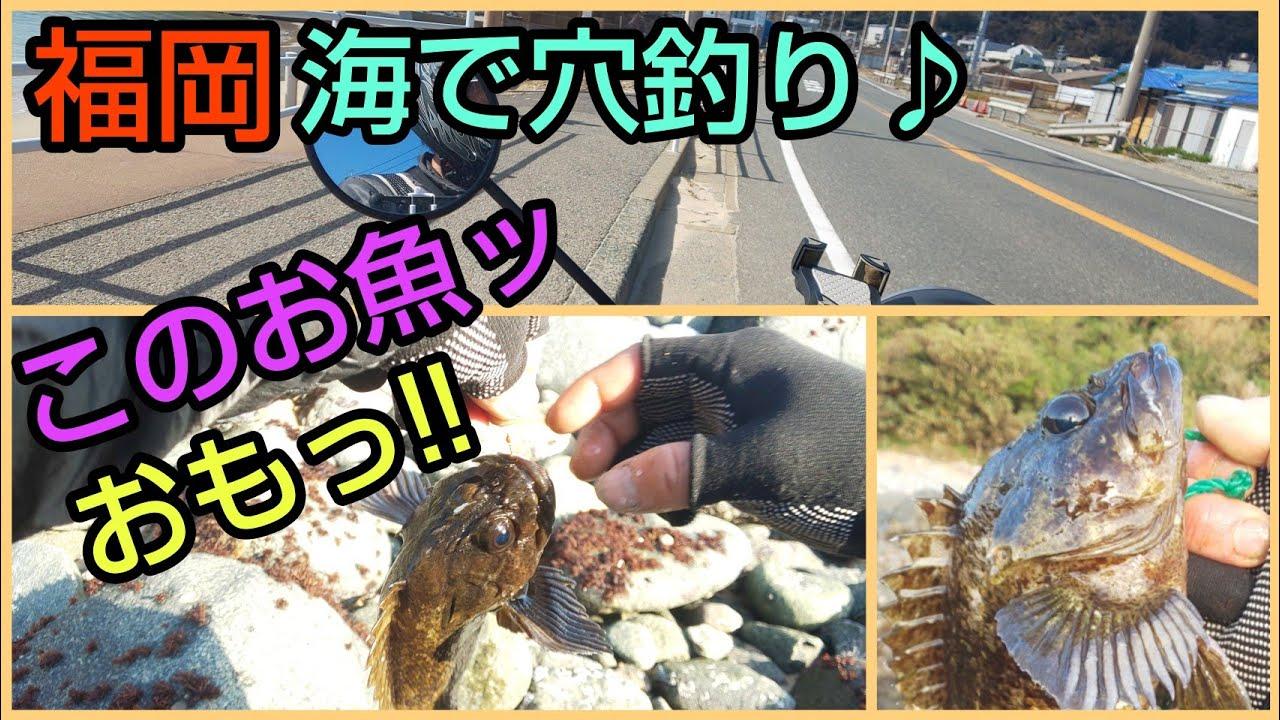 福岡 海で穴釣り♪この魚ッおもっ!!