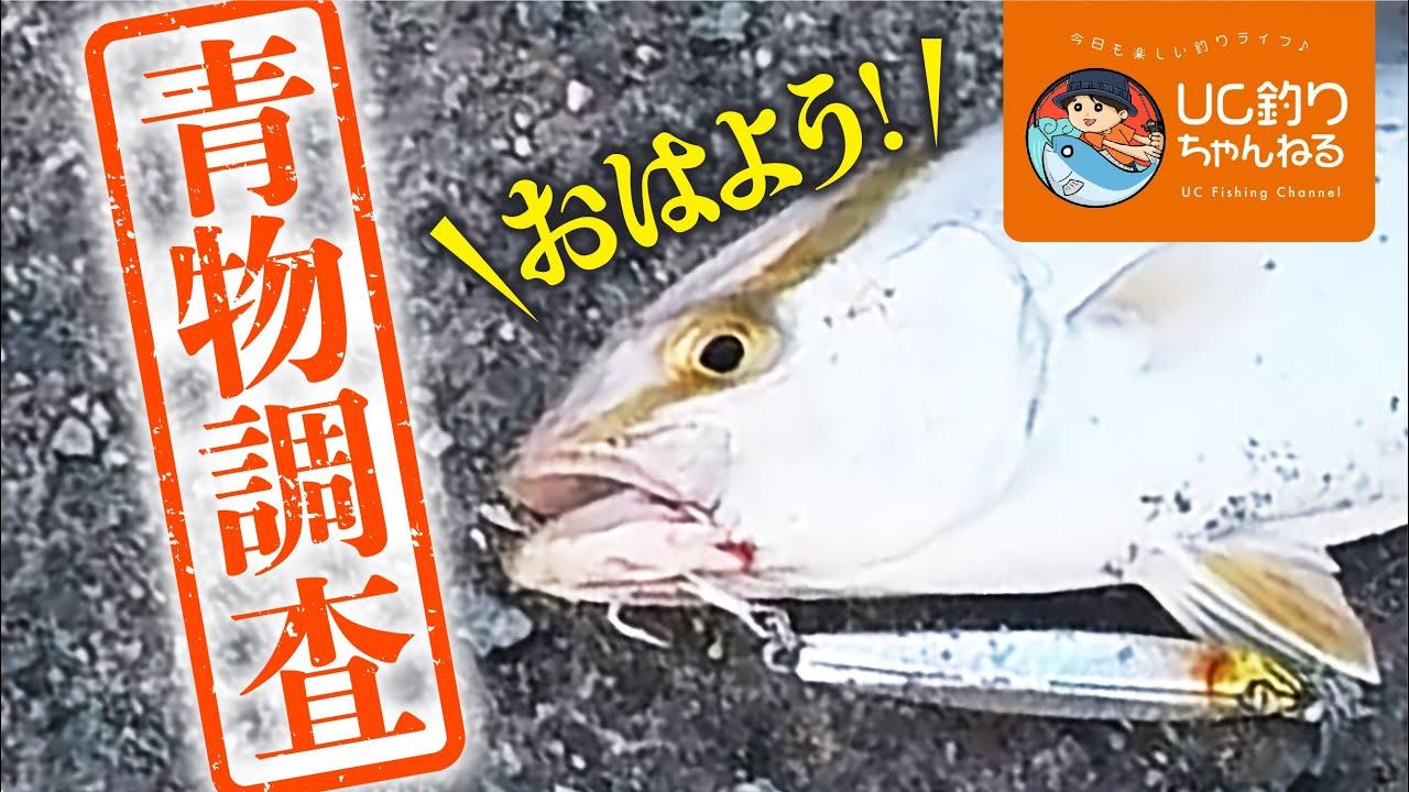 福岡で青物の噂あり!漁港に釣り調査に行ってショアジギングで確かめる!