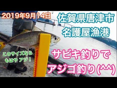 サビキ釣りでアジゴ釣り佐賀県唐津市名護屋漁港
