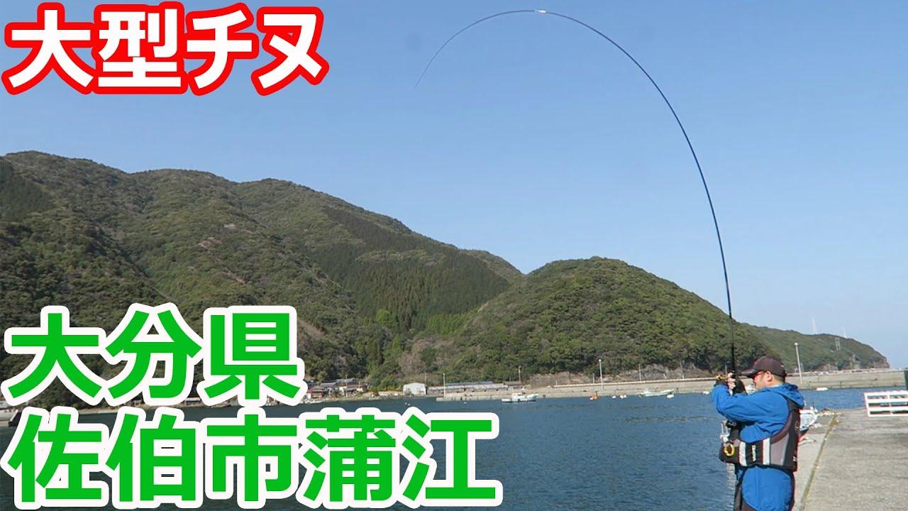 大分県蒲江で超大型チヌを狙っていたら・・・
