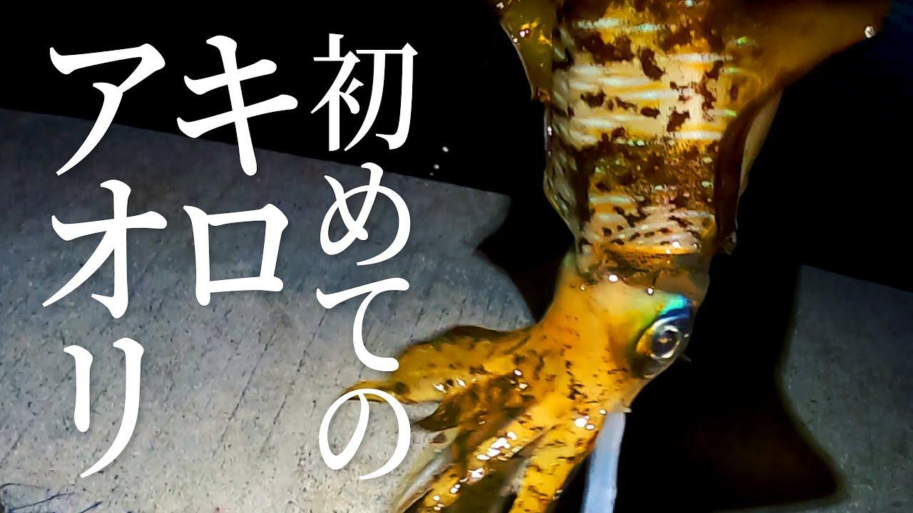 佐伯市 冬エギングでキロアップのアオリイカが釣れました