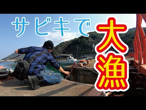 【過去最高釣果】冬のサビキ釣り(天草)