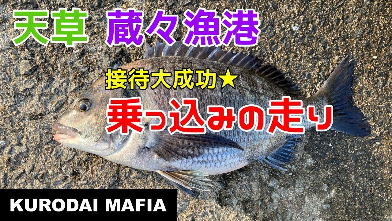 【天草】蔵々漁港で接待釣行。乗っ込みの走りのチヌ
