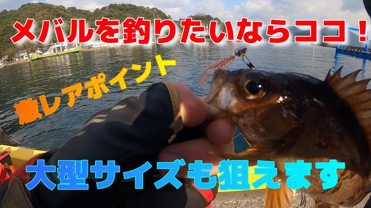 天草でメバルがよく釣れるポイントをご紹介します!必見
