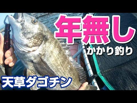 ダゴチン(かかり釣り)で年無しゲット&真鯛乱舞!