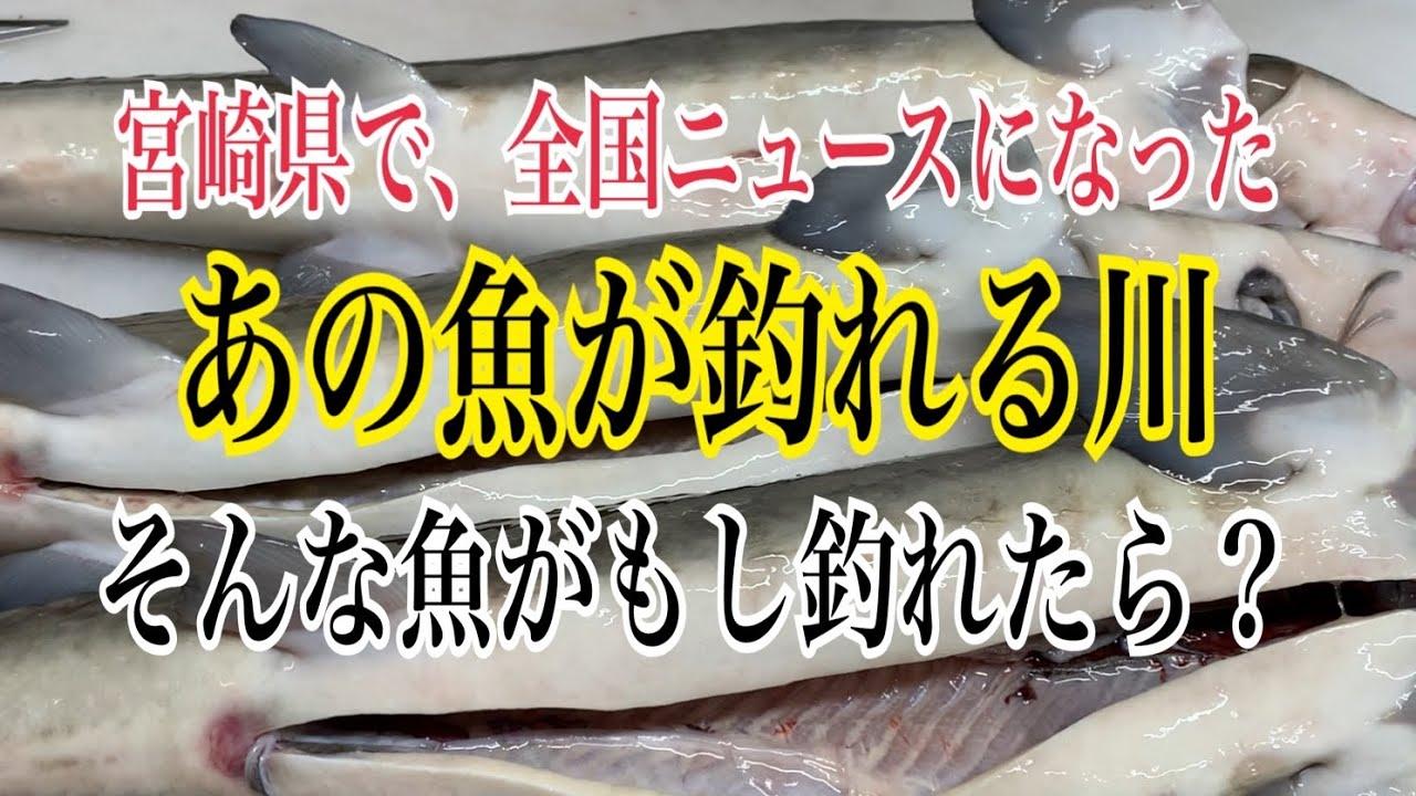 宮崎県で全国ニュースになった【あの魚が釣れる川】編