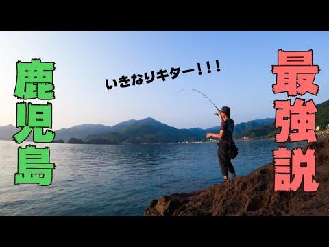 鹿児島県ならエギング素人でも100%アオリイカが釣れる説