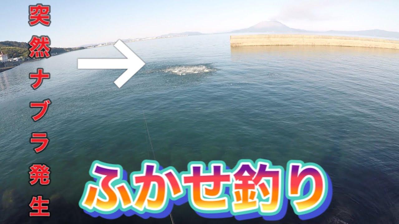 【喜入港】フカセ釣りでいろんな魚が釣れたよ‼️突然ナブラ発生‼️