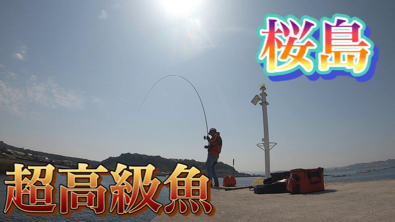 【桜島】久しぶりに桜島で釣りしたら超高級魚が釣れた‼️