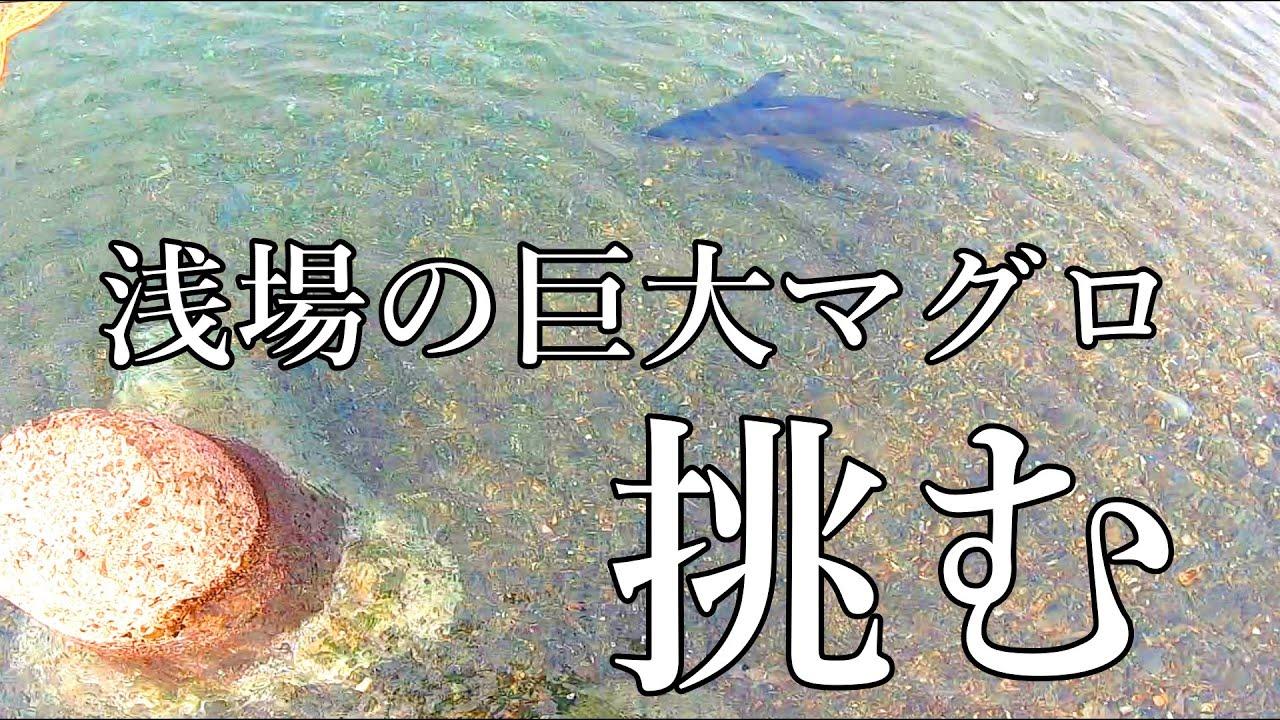 【桜島】海岸に突如現れた【巨大マグロ】に挑む!