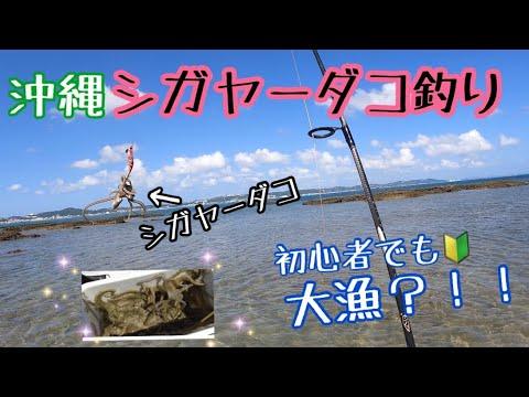 【シガヤーダコ釣り】初心者でも楽しめるタコ釣り!