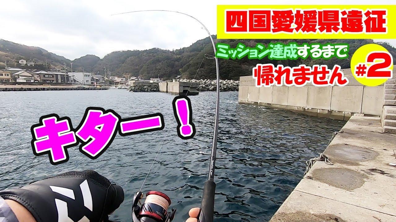 四国愛媛県の堤防で視聴者さんと「10種目」釣り上げろ‼