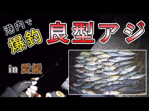 アジングの聖地!港内で良型が大量に釣れる時期の釣果