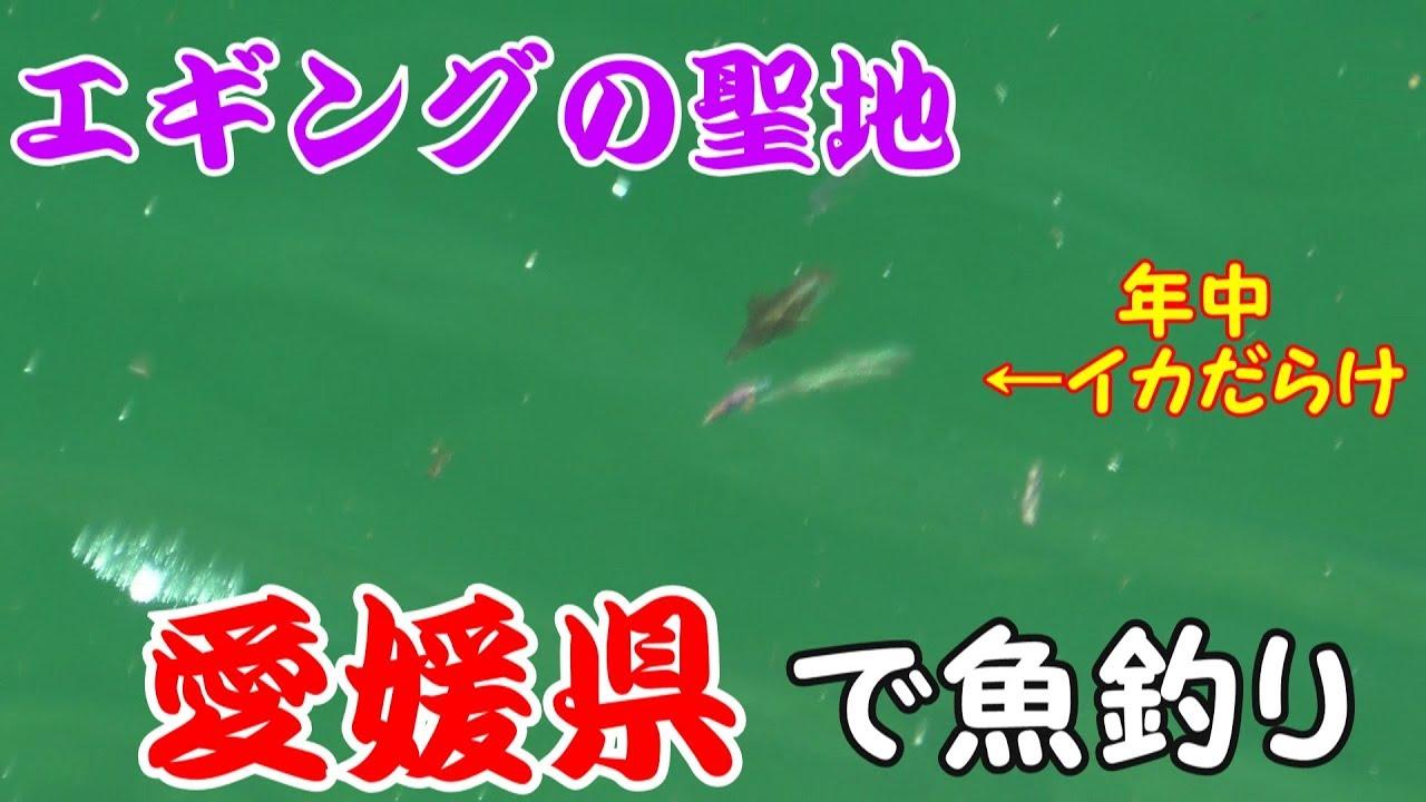 愛媛県で魚釣り エギング編