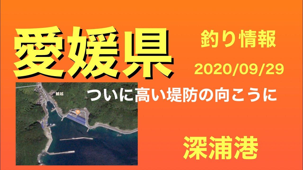 【釣り情報】久しぶりに愛南町!高い堤防の向こう