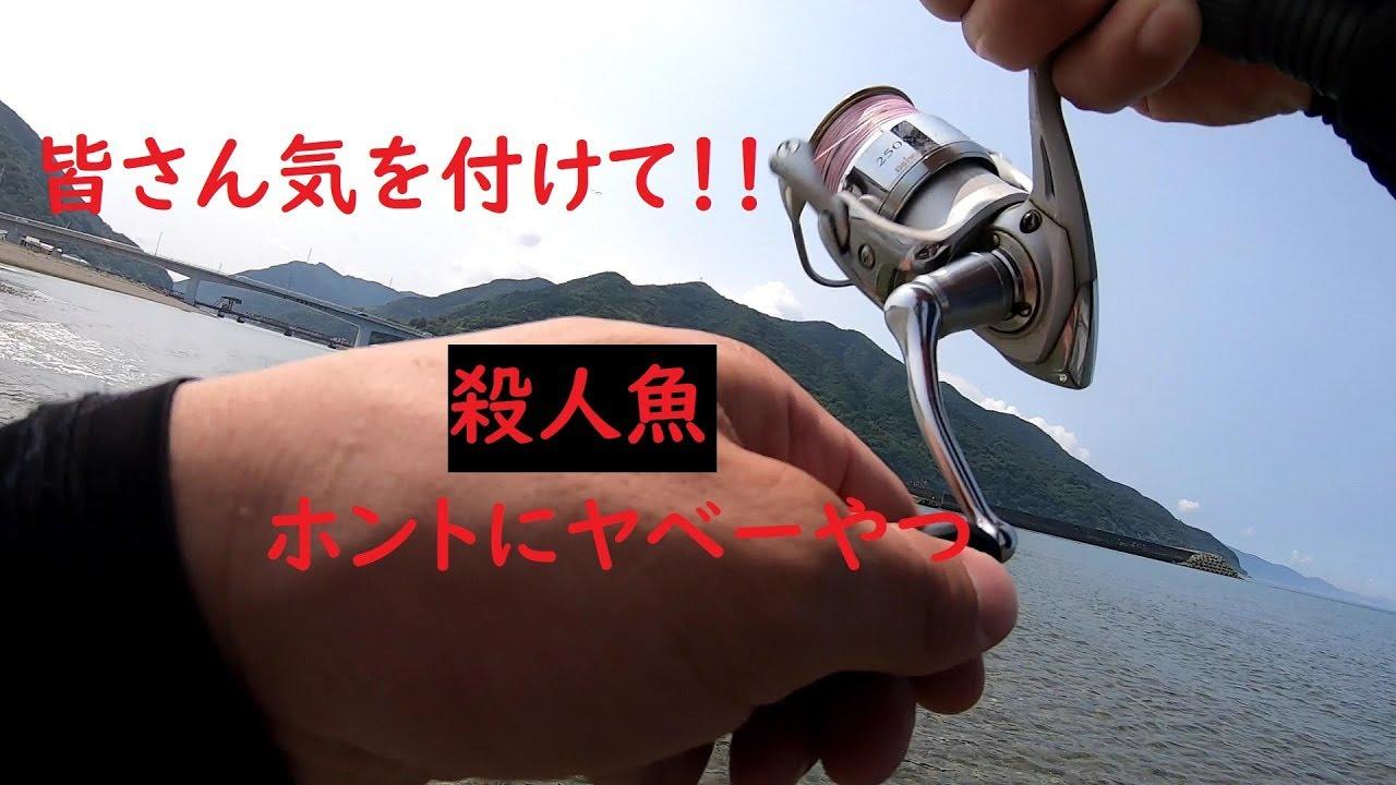 愛媛県の河口で殺人魚に襲われちゃった。。