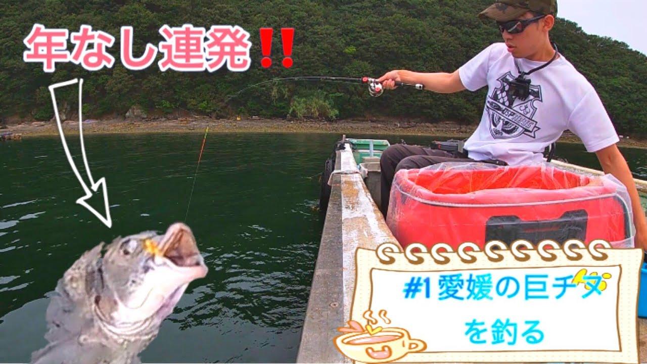【チヌかかり釣り】愛媛の巨チヌを釣る‼️
