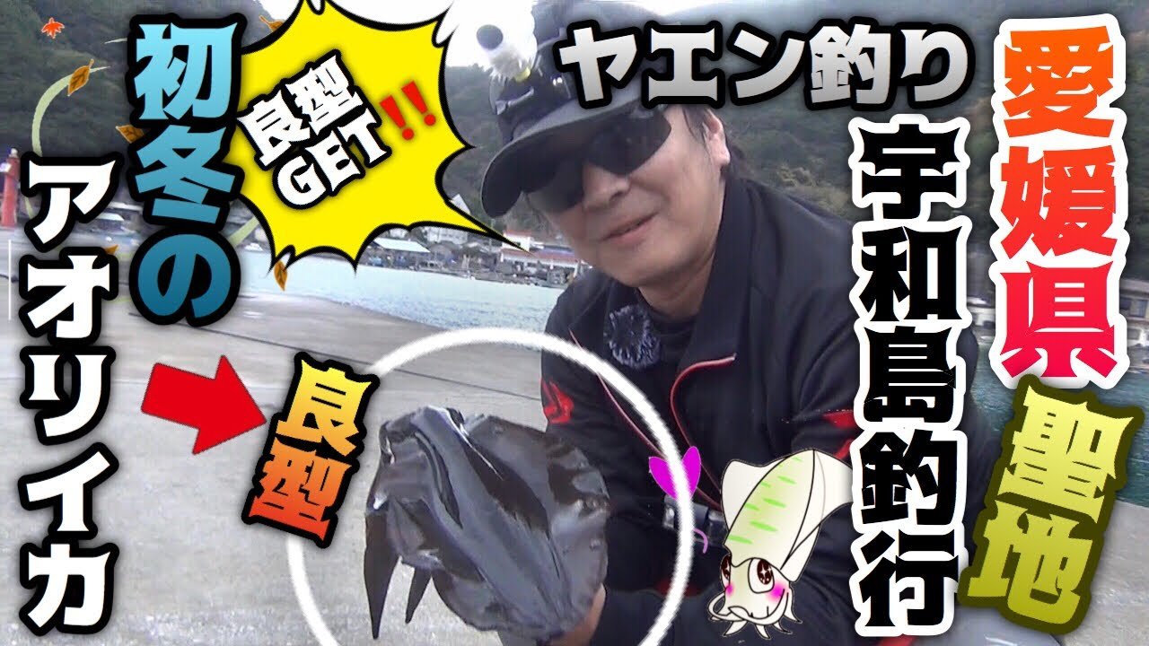 【ヤエン釣り】初冬の良型アオリイカを狙え!聖地宇和島!