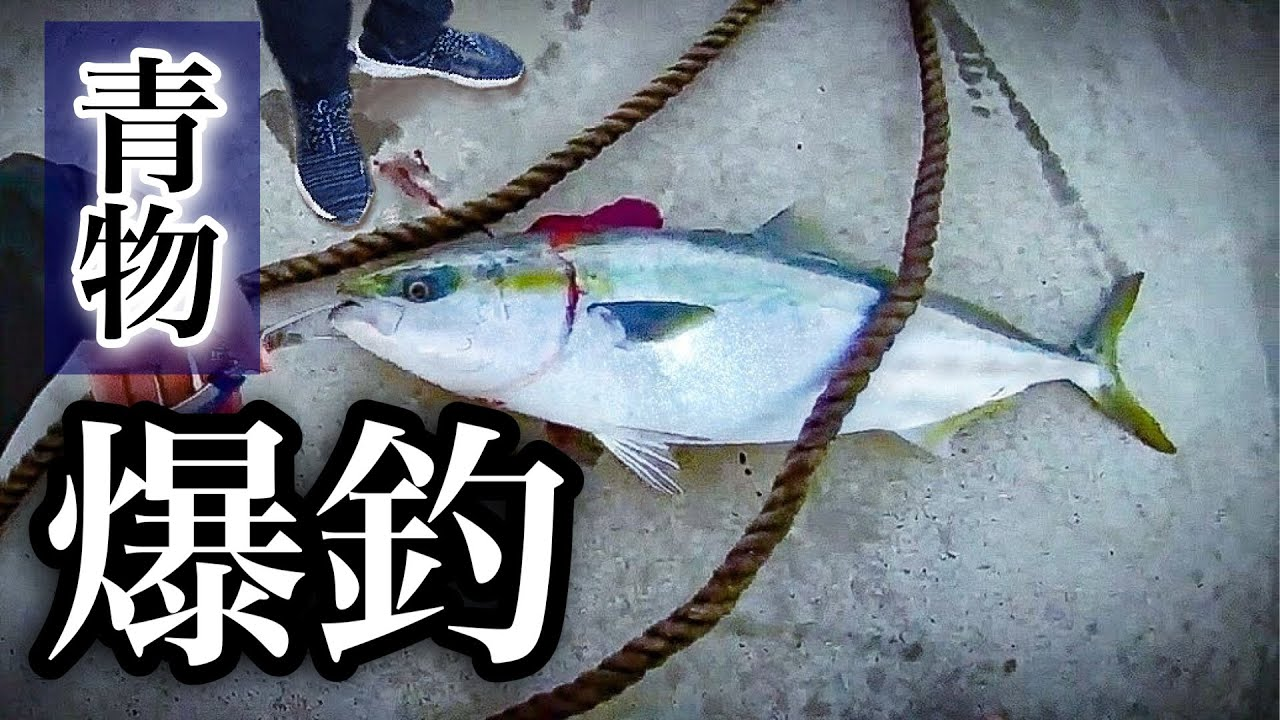 堤防でのルアー釣りで遂に青物爆釣した!