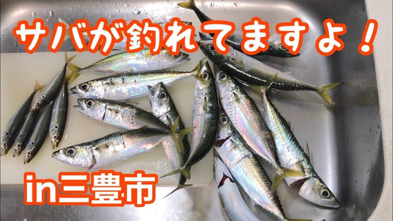 三豊市仁尾町の波止場からサバが簡単に釣れました