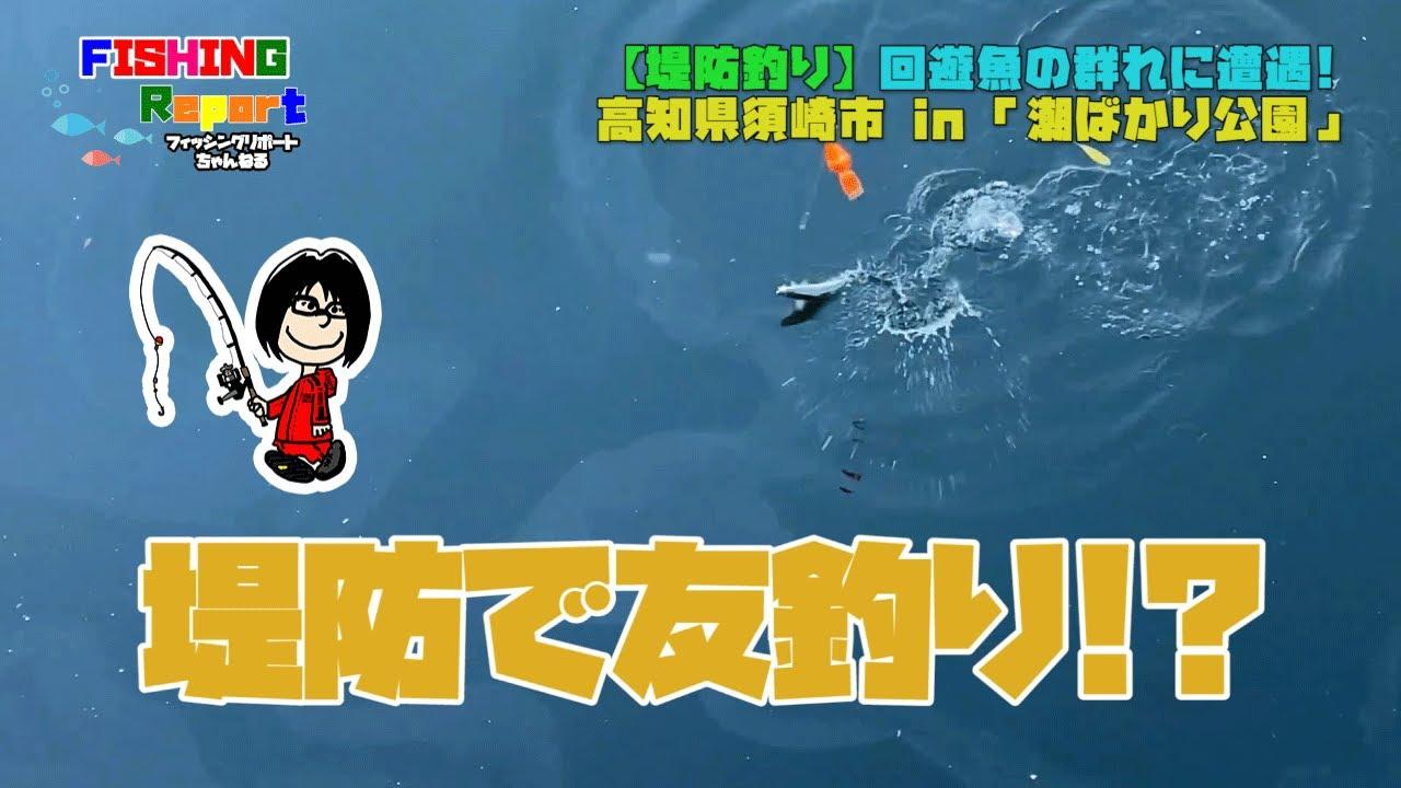 思わぬ回遊魚の群れに遭遇!!in 高知県須崎市「潮ばかり公園」