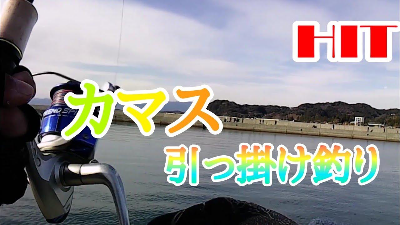 『カマスの引っ掛け釣り』高知県香南市手結港