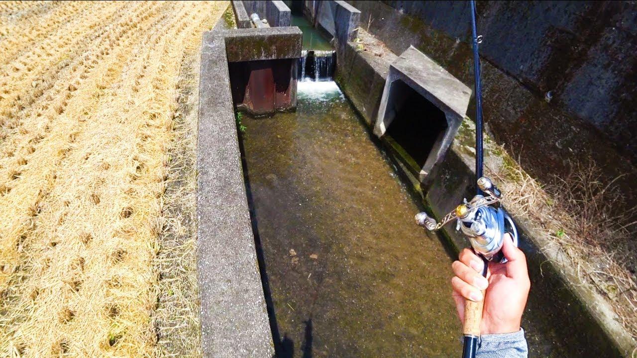 丸見えの水路で釣りをしたら楽しすぎた!