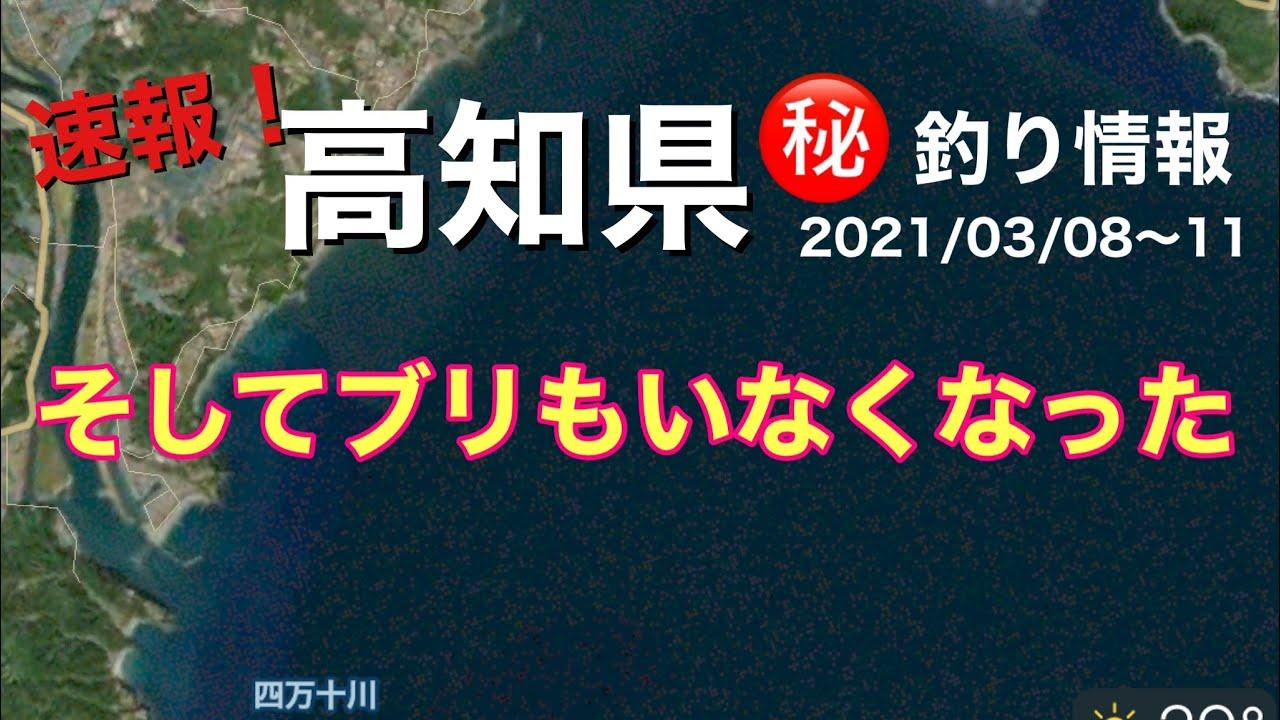 【㊙️釣り情報】青物シーズン終了間近?