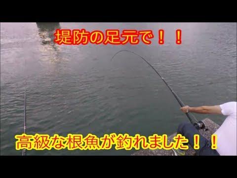 「浦戸湾の釣り2」で堤防の足元で高級魚が釣れた!