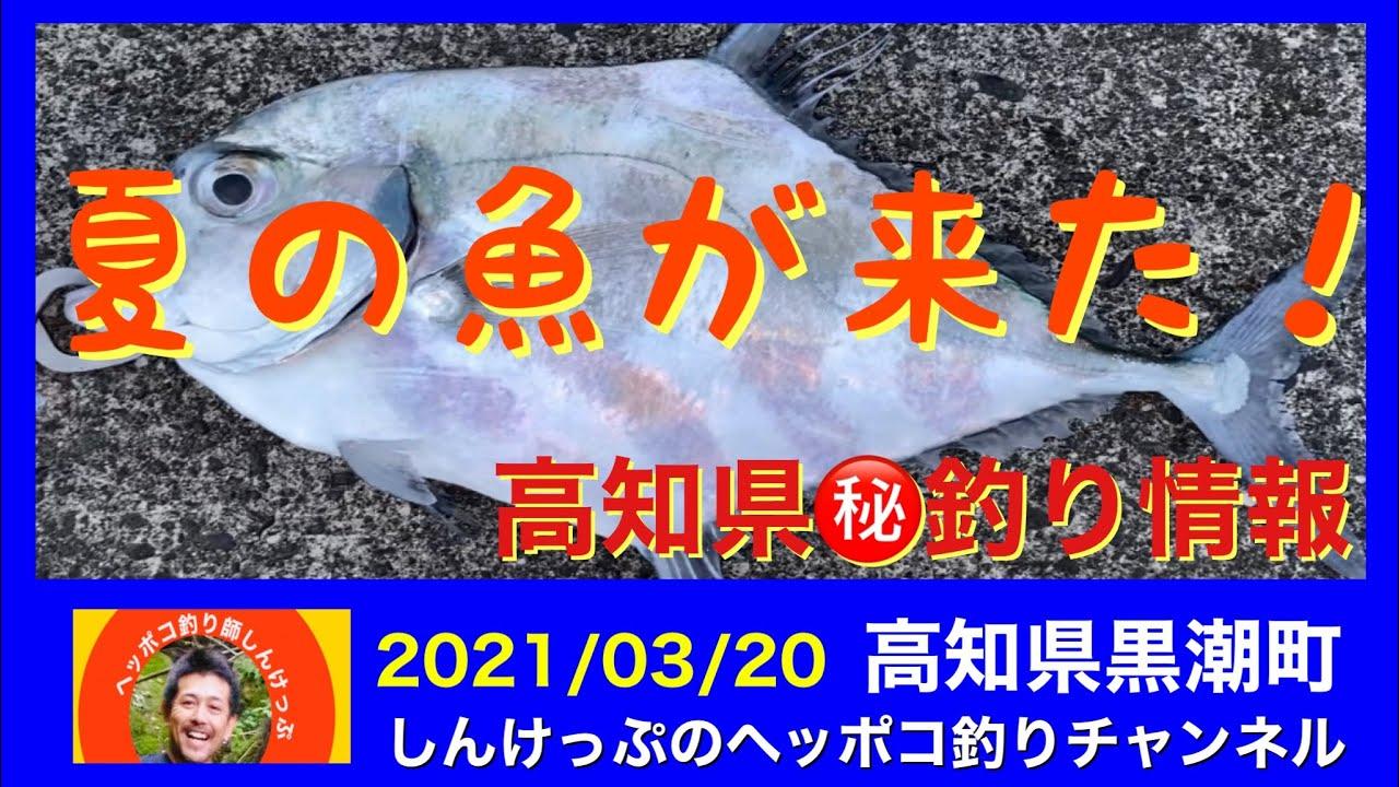 【㊙️釣り情報】夏の怪魚現る❗️海の中は一気に夏モード❗️❓