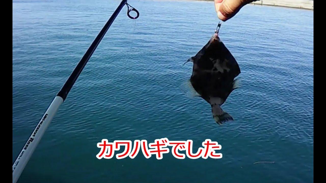 『波止釣り』高知県香南市夜須町 手結漁港