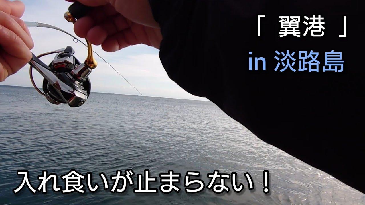 12月下旬 淡路島 (五目釣り) 入れ食い状態!