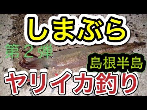 しまぶら ヤリイカ釣り第2弾 【島根ブランド】 島根県松江市 日本海 山陰