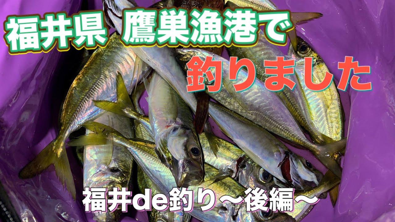 【鷹巣漁港】夫婦でアオリイカ&アジ釣りに挑戦!良型アジ連発で大満足♫