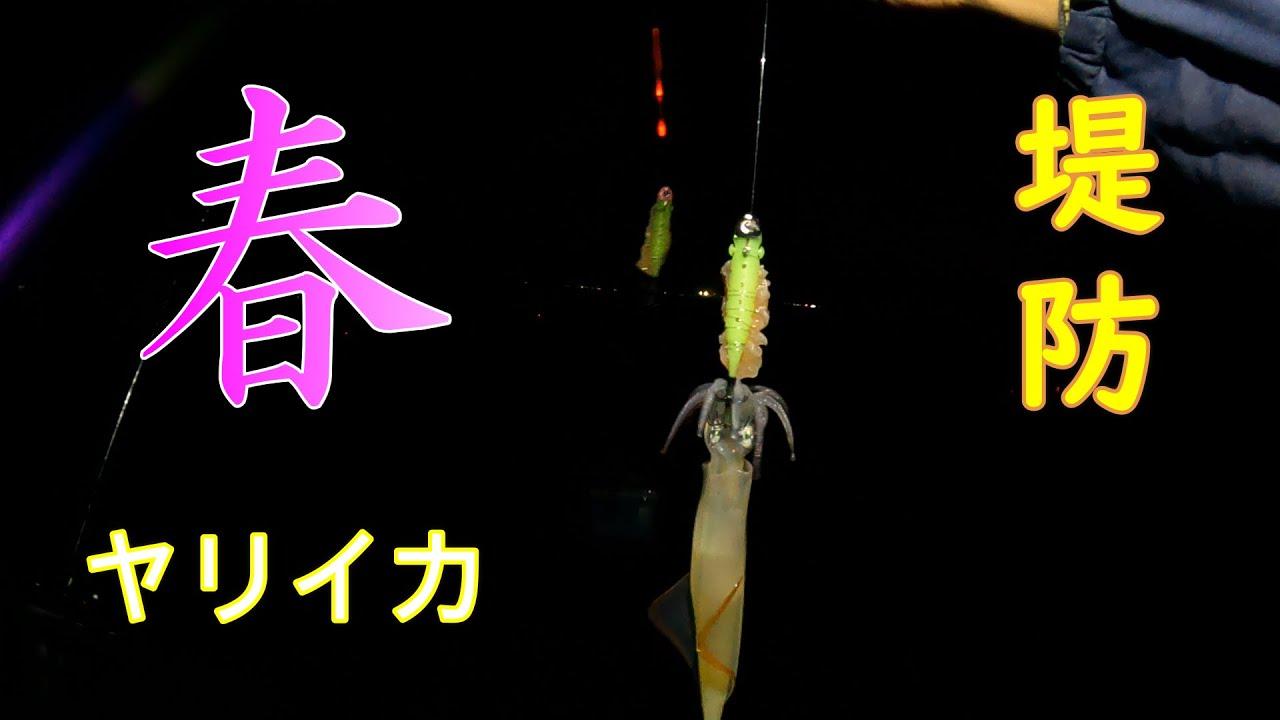 福井県超有名ポイントで堤防ヤリイカ釣り