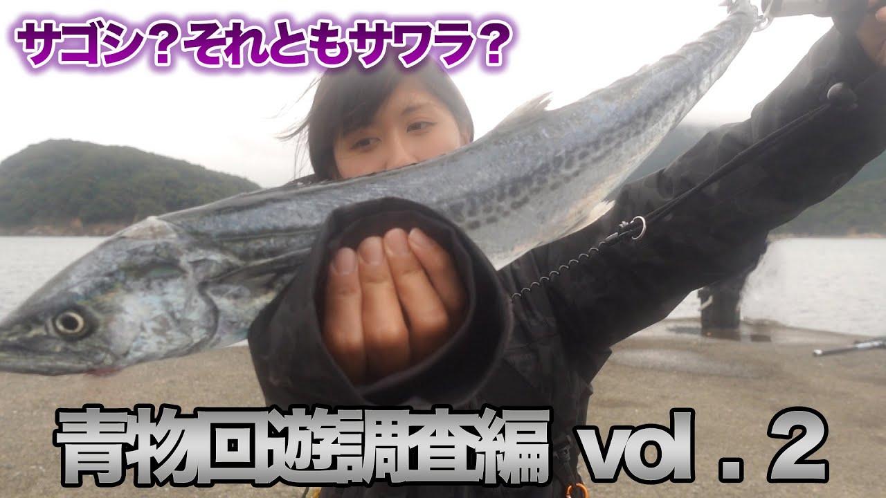 【青物】回遊調査!ショアジギング・福井堤防釣り
