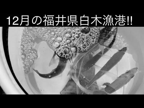 12月福井釣行!白木漁港