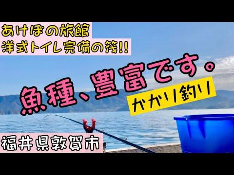 【チヌかかり釣り】敦賀市で快適すぎる筏釣り!!あけぼの旅館の筏釣りカセ釣り