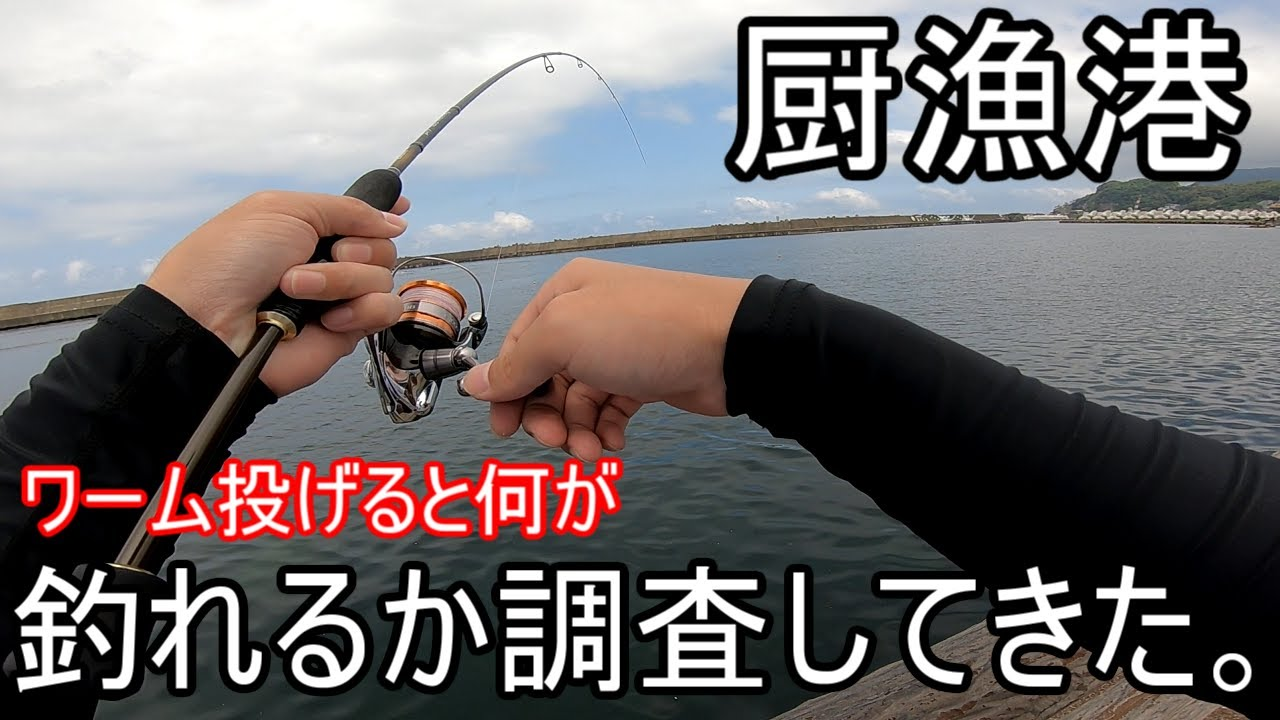 【厨漁港】ワーム投げると何が釣れるか調査