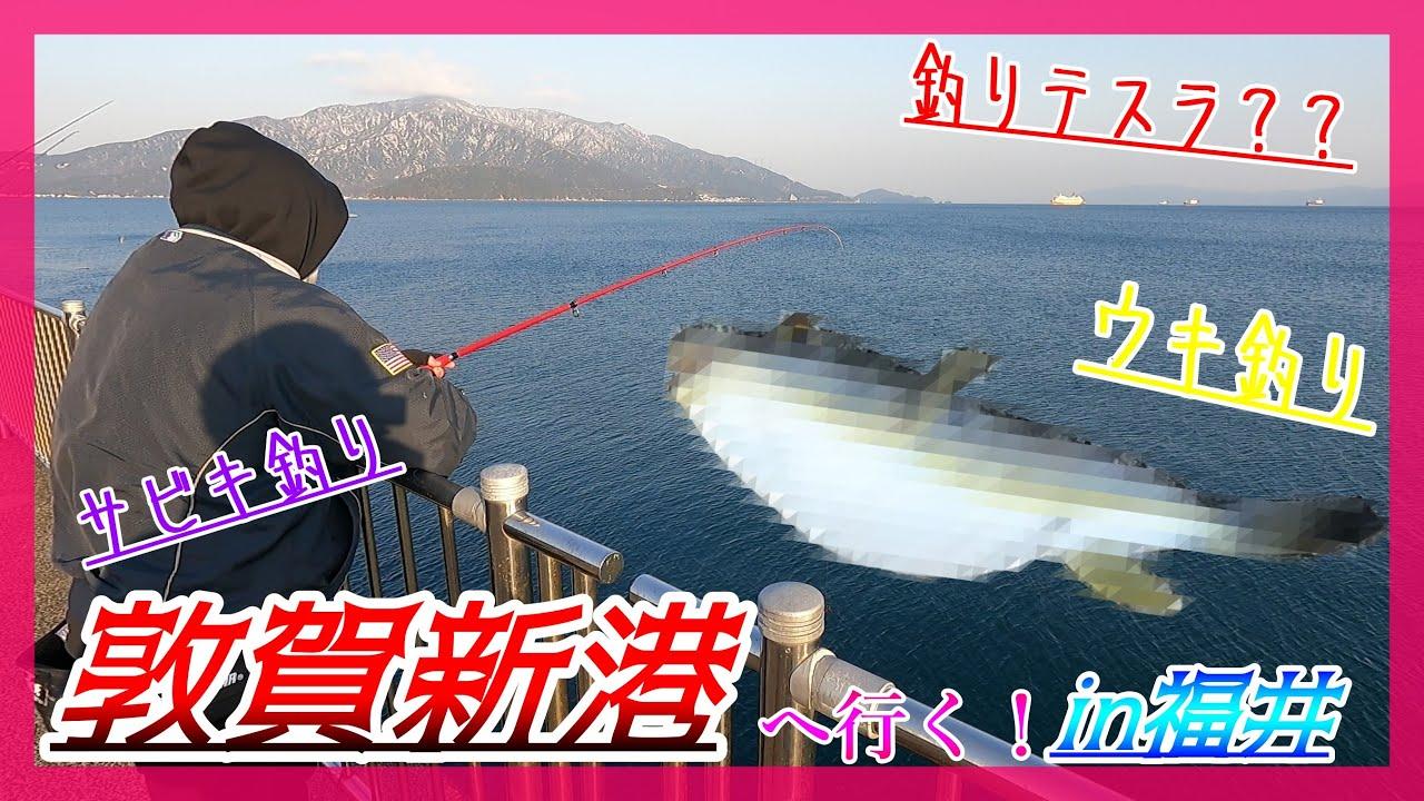 敦賀のおススメ釣りスポット!敦賀新港ウキ釣りサビキ釣り