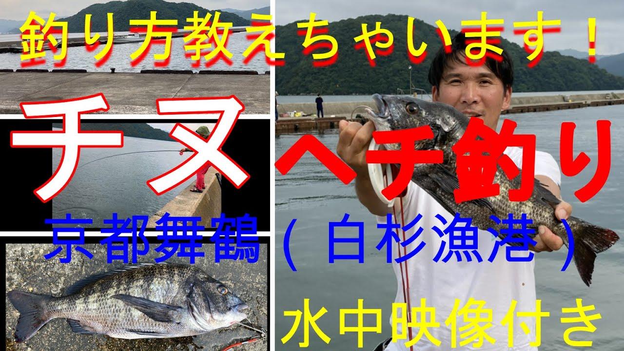 チヌ釣り京都舞鶴(白杉漁港)