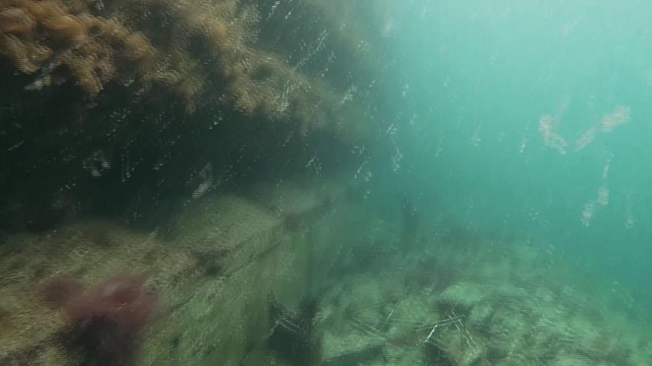 3月6日 伊根 水中映像 (釣り)