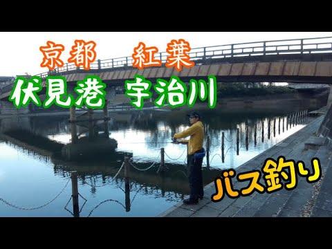 【伏見港・宇治川 京都バス釣り】地元思い出の場所